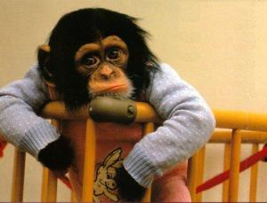 usaginya lagi jdi monyet...